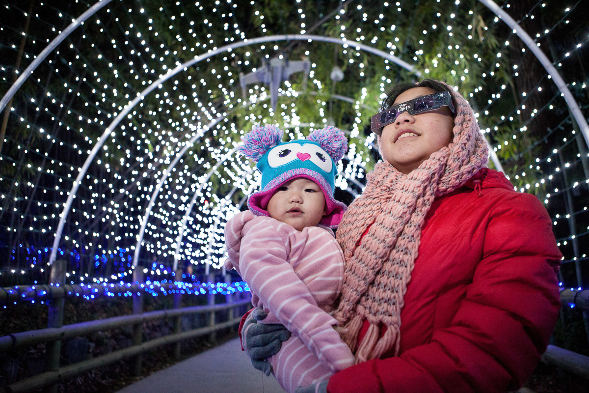 fresno zoo lights takes place at the fresno chaffee zoo over several nights throughout the winter holiday season